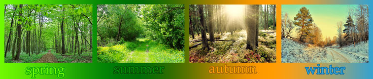Seasons. Forest in spring, summer, autumn and winter royalty free stock photos