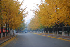 Seasons: Gold Autumn in China Stock Photo