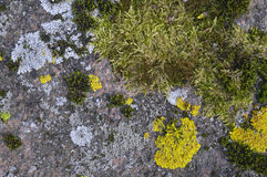 Seasons on a granite stone Royalty Free Stock Image