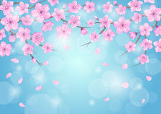 Seasons greeting background with cherry blossoms flowers branches on blue backdrop with bokeh Royalty Free Stock Photo