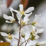 Seasons Greetings. The springtime blossom of a garden tree royalty free stock photos