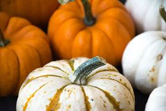 Season. S of harvest and celebration. Pumpkins nice color Royalty Free Stock Photos