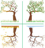 Seasons in the mirror. A vector illustration of the four seasons tree in the mirror Stock Image