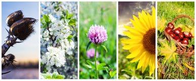Seasons.Set av vertikala baner Fotografering för Bildbyråer