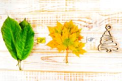Seasons: Summer, Autumn, Winter. Leaves on a white wooden background Royalty Free Stock Photography