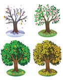 Seasons tree Stock Image