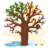 Seasons on a tree Stock Images