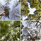 Seasons trees sky. Collage. Royalty Free Stock Images