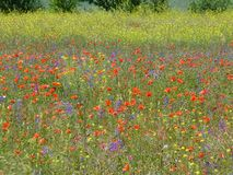 Seasons of the year. Wild flowers in the meadow. royalty free stock photo