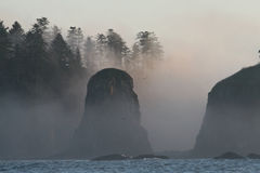 Seastacks on Wild Pacific Coast Royalty Free Stock Images