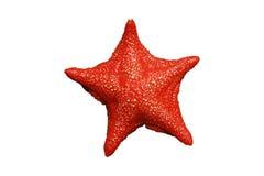 Seastar Royalty Free Stock Photo