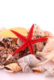 Seastar Stock Image