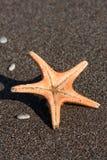 Seastar Royalty Free Stock Images