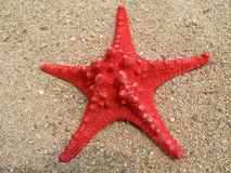 Seastar Stock Images