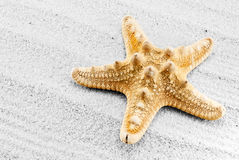 Seastar. Royalty Free Stock Photo