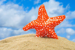 Seastar Obrazy Royalty Free