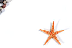 Seastar Stock Photos