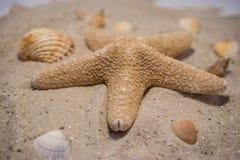 Seastar Images libres de droits