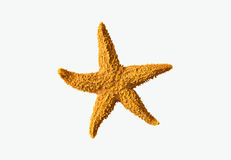 Seastar Fotografia de Stock Royalty Free