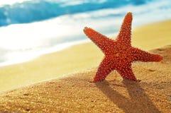 Seastar auf dem Sand eines Strandes Lizenzfreie Stockfotografie