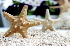 Seastar auf dem Strand Stockbild