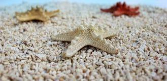 Seastar auf dem Strand Stockfoto