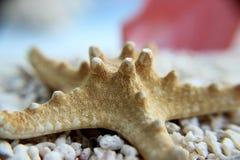 Seastar auf dem Strand Stockfotos