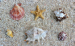 Seastar auf dem Strand Lizenzfreie Stockfotos