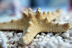 Seastar auf dem Strand Lizenzfreie Stockbilder