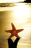 Seastar auf dem Ufer eines Strandes lizenzfreies stockfoto