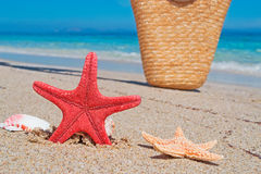 Seastar and bag Stock Images