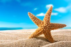Seastar on the beach. Beautiful  seastar on the sandy beach. Holiday concept Stock Photography