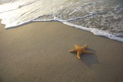 Seastar on the beach. A seastar is lying on the beach Stock Images