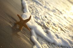 Seastar on the beach. A seastar is lying on the beach Royalty Free Stock Photography