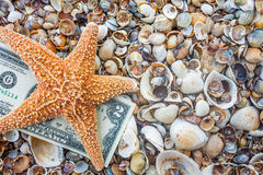 Seastar and dollar note on sea coast Royalty Free Stock Images