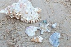 Seastar e conchiglie alla spiaggia Fotografia Stock