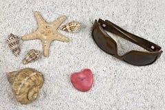 Seastar e escudos Imagem de Stock
