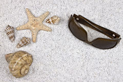 Seastar e escudos Fotografia de Stock