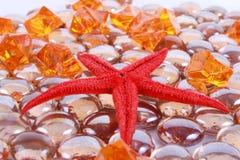 Seastar e gemas Fotografia de Stock Royalty Free