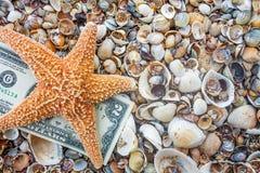 Seastar e nota del dollaro sulla costa di mare Immagini Stock Libere da Diritti