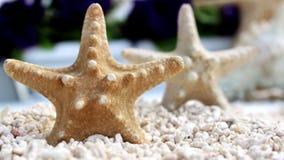 Seastar en la playa Foto de archivo libre de regalías