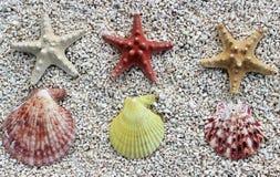 Seastar en la playa Imágenes de archivo libres de regalías