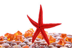 Seastar and gems Stock Photo