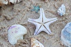 Seastar i Seashells przy plażą Zdjęcia Royalty Free