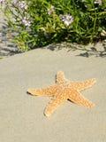 Seastar Stock Photography