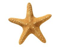 Seastar isolated on white Royalty Free Stock Images