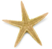 Seastar, isolated on white background Stock Image