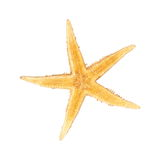 Seastar, izolated on white background Royalty Free Stock Photo