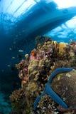 Seastar met boot. Filippijnen Royalty-vrije Stock Afbeeldingen