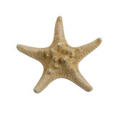 Seastar Royalty Free Stock Photo